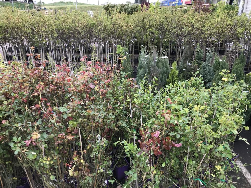 Arbres et plantes